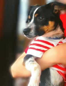 Milo il cane più bello del mondo